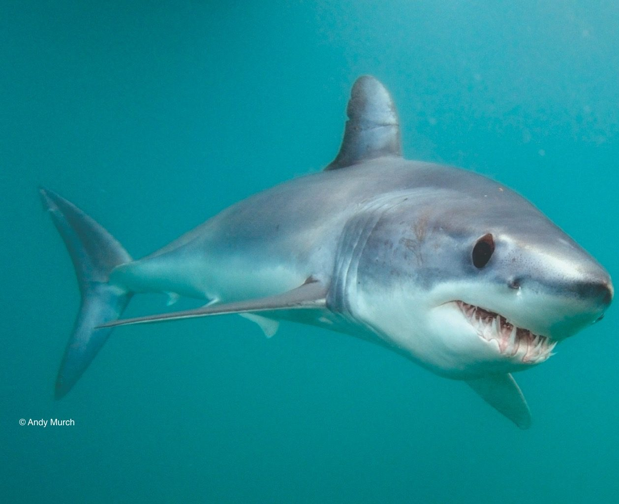 Petition: Stop uncontrolled shark fishing now!
